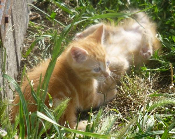 Emergency Kitten – 10cc of adorable, stat!